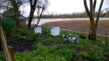the Bee-Garden slowly being surrounded by water