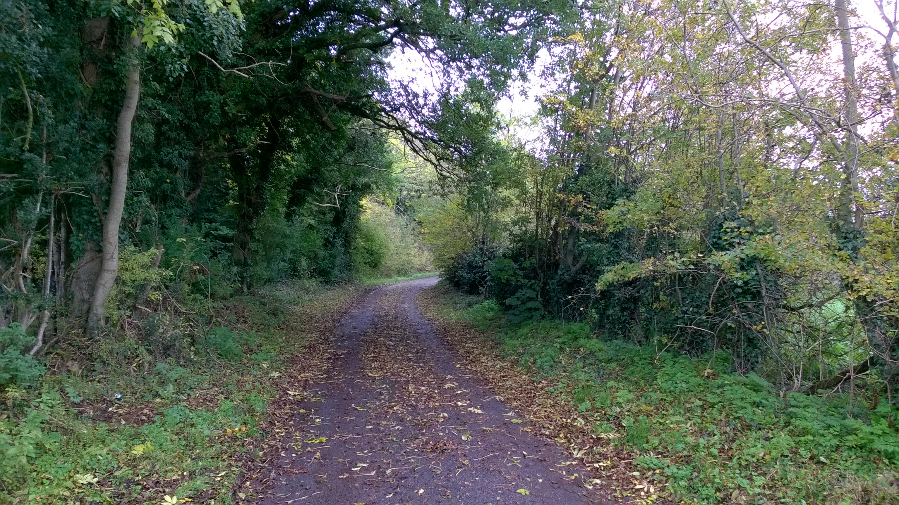 breagh lane